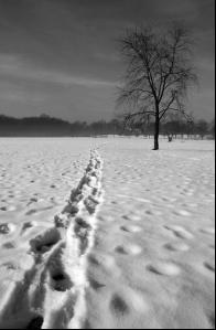 Winter's Trail by Pef